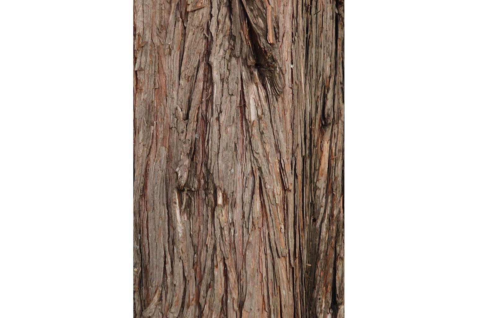 Corteza fibrosa del tronco que se desprende en tiras