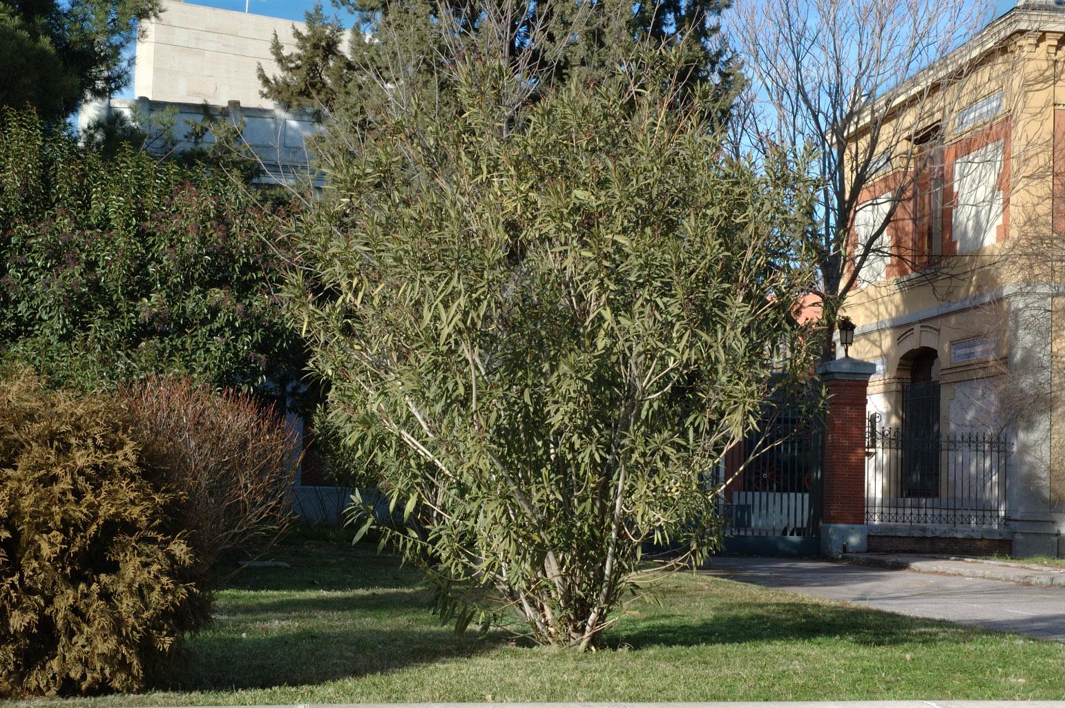 Aspecto del arbusto en invierno